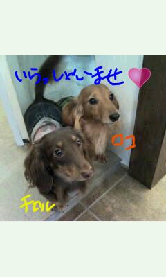 Oekaki_0002.jpg
